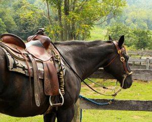 Conduire sa vie, c'est comme savoir maîtriser son cheval.